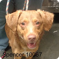 Adopt A Pet :: Spencer - baltimore, MD