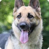 Adopt A Pet :: Brooke - Nashville, TN