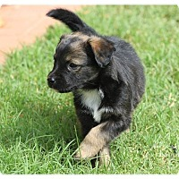 Adopt A Pet :: Luke - Tempe, AZ