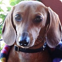 Adopt A Pet :: HUDLEY - Portland, OR