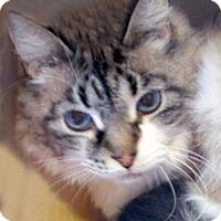 Adopt A Pet :: Crystal - Gilbert, AZ