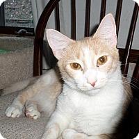 Adopt A Pet :: Brickle(CP) - Carlisle, PA