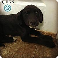 Adopt A Pet :: Quinn - Kimberton, PA