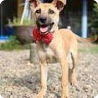 Adopt A Pet :: LuLu-Judy - Seattle, WA