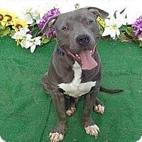 Adopt A Pet :: Jackson - Lebanon, ME