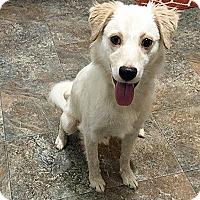Adopt A Pet :: Kit - BIRMINGHAM, AL