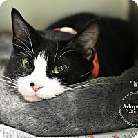 Adopt A Pet :: Tiny - Philadelphia, PA