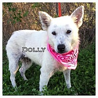 Adopt A Pet :: Dolly - Comanche, TX
