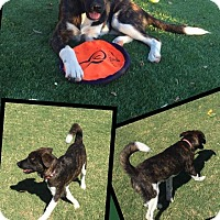 Adopt A Pet :: Miley - Scottsdale, AZ
