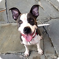 Adopt A Pet :: Zoey - Atlanta, GA