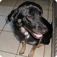 Adopt A Pet :: VETERAN - Coudersport, PA