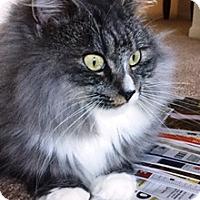 Adopt A Pet :: Gypsy - Lebanon, PA