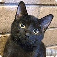 Adopt A Pet :: Claire - Phoenix, AZ