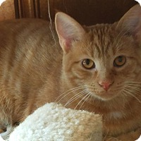 Adopt A Pet :: Wink - Jeannette, PA