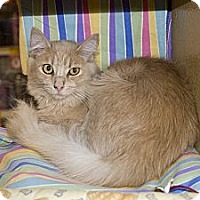 Adopt A Pet :: Palmer - New Port Richey, FL