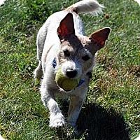 Adopt A Pet :: Rocky 4 - Rhinebeck, NY