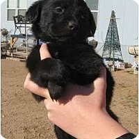 Adopt A Pet :: Toby - Golden Valley, AZ