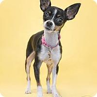 Adopt A Pet :: Mackenzie - Phoenix, AZ