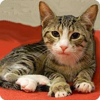 Adopt A Pet :: Adelbert - The Colony, TX