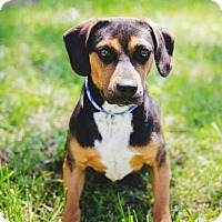 Adopt A Pet :: Scout About - Fayetteville, GA
