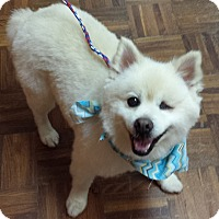 Adopt A Pet :: Lucky - Bedford, VA