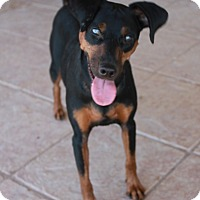 Adopt A Pet :: Snoop - Buckeye, AZ