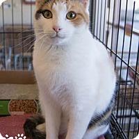 Adopt A Pet :: Twinkle - Merrifield, VA