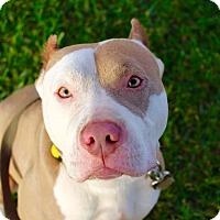 Adopt A Pet :: Gracie - Cypress, CA
