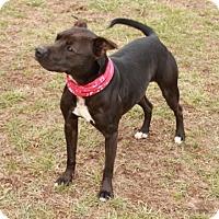 Adopt A Pet :: Olive - Salem, NH