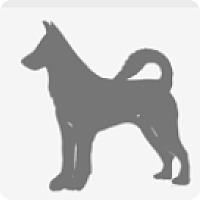 Australian Cattle Dog Mix Dog for adoption in E. Greenwhich, Rhode Island - Piglet