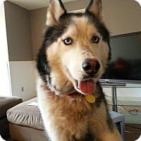 Adopt A Pet :: Koby - Salem, OR