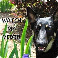 Adopt A Pet :: Karma - Greensboro, NC