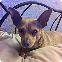 Adopt A Pet :: Chuck - San Jose, CA