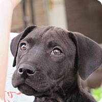 Adopt A Pet :: Dexter - Broken Arrow, OK