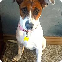 Adopt A Pet :: Armani - Salt Lake City, UT