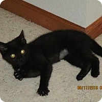 Adopt A Pet :: Leyla - Fort Collins, CO