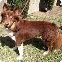 Adopt A Pet :: BOOMER - San Pedro, CA