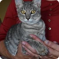 Adopt A Pet :: Spice - Surrey, BC