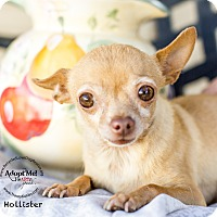 Adopt A Pet :: HOLISTER - Inland Empire, CA