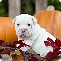Adopt A Pet :: Raphaela - New City, NY
