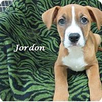 Adopt A Pet :: Jordon - Bartonsville, PA