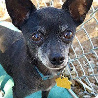 Adopt A Pet :: Mister - New River, AZ