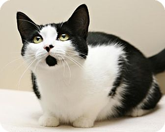 Cat Rescue Bellingham Wa