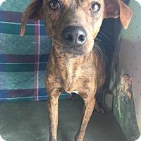 Adopt A Pet :: Sammy - Manchester, CT