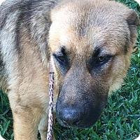 Adopt A Pet :: Ranger - Orlando, FL