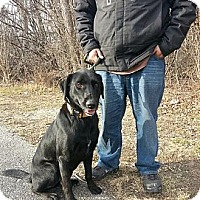 Adopt A Pet :: Maxwell - Silver Lake, WI