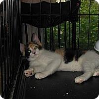 Adopt A Pet :: Cleo - CARVER, MA