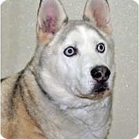 Adopt A Pet :: Blizzard - Port Washington, NY