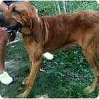 Adopt A Pet :: HANNAH MAE-SEBR - Georgetown, KY