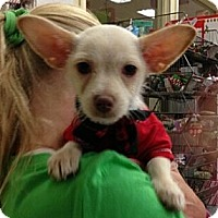 Adopt A Pet :: Simon - Encinitas, CA